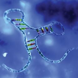 biomarkers miRNA