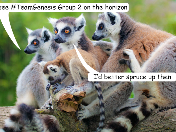 Lemurs resized Spruce