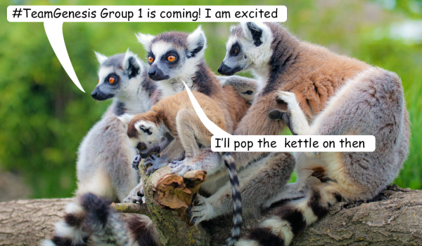 Lemurs wishing #TeamGenesis good luck